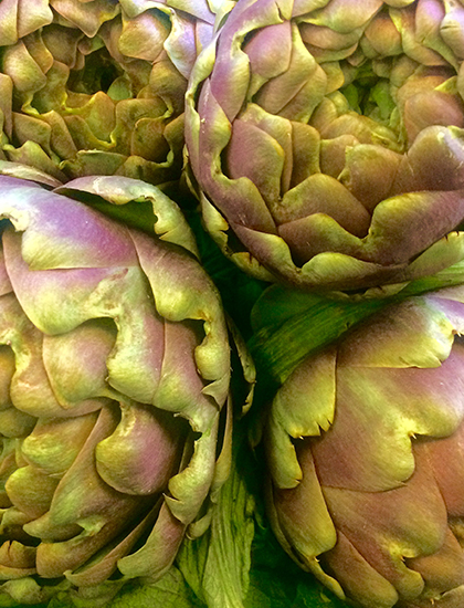 French Globe Artichokes
